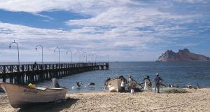 MEXICO – Realizan muestreo de Camarón en bahías de Sonora