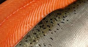 CHILE – Distribuidor japonés de productos del mar se instala en Chile