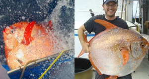 Descubren el primer pez 100% con sangre caliente
