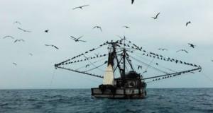 Ecuatorianos realizan controles marítimos para proteger a la Merluza