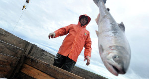 Prohibición rusa de pesca con redes de deriva afectará a Japón