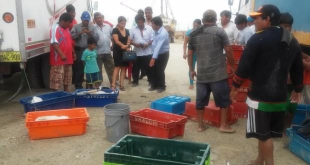 PIURA- Decomisan 340 kilos de Caballa con tallas pequeñas en Constante