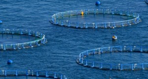 Produce instalará un CITE acuícola pesquero en Tacna