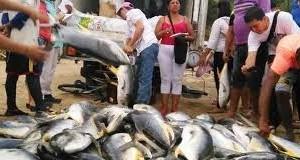 COLOMBIA – Atrapan 6 toneladas de Jurel en dos días