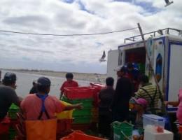 SECHURA – Decomisan más de 3.500 kilos de Caballa en desembarcadero Las Delicias