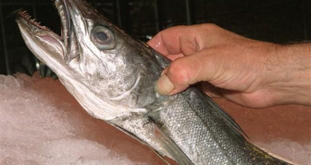 Científicos aconsejan bajar la pesca de Merluza en aguas ibéricas