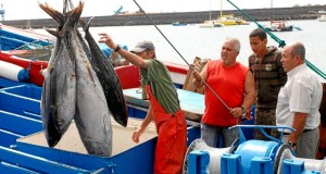 Pedidos de aumento de cupo para pesca Atún  marcó cita