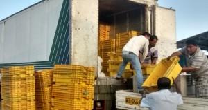 PIURA – Decomisan 9.7 toneladas de caballas que no cumplían medida