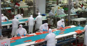 CHILE – Producción de Salmón se reduciría en hasta 15% en los próximos dos años