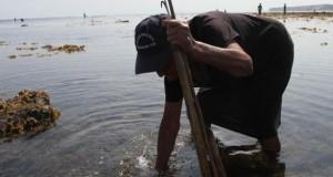 Baja marea revela manjares marinos en Manta