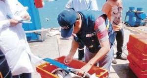 PIURA – Especie Caballa podría perderse por pesca ilegal