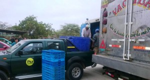 Decomisan 2.3 toneladas de Caballa chica en Paita
