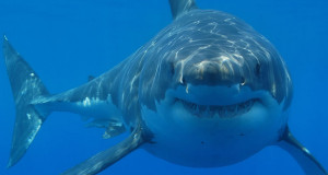 Tiburones atacan a surfista y pescador en Australia