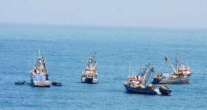 Pesca industrial de Anchoveta crecería en 80% este año pese a El Niño