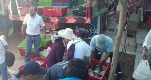 PIURA – Decomisan ocho toneladas de Caballa con tallas juveniles