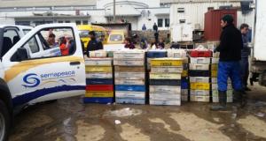 CHILE – Sernapesca incautó 5,5 toneladas de Merluza común en veda