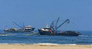 El Niño genera importantes niveles de pesca de Bonito y Caballa