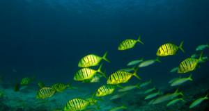 El futuro de los océanos en riesgo