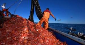 CHILE – Industriales pesqueros rechazan licitación de crustáceos ordenada por el gobierno