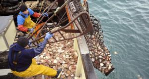 Siete naves arrastreras fueron intervenidas por pescar ilegalmente en primeras 5 millas marinas de Piura