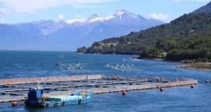 """CHILE – Sociedad Chilena de Ciencias del Mar recomienda modificar """"urgentemente"""" la regulación acuicultora"""