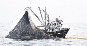 La pesca de Anchoveta ya va en un 50% de la cuota global