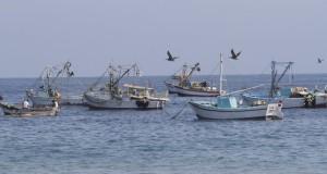 TACNA – Naves pesqueras se aventuran a zona de Mar recuperado