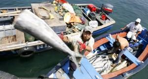 ROMA – Pesca ilegal provoca millonarios estragos a economía global