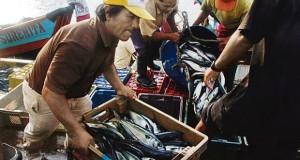 LAMBAYEQUE- Pescadores artesanales pierden 30% de ganancias por ausencia de especies