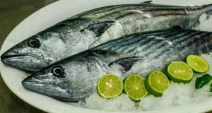 Produce autoriza pesca exploratoria del recurso Bonito en el Mar peruano