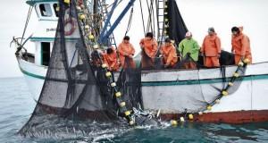 Segunda Temporada de Pesca: Descarga de Anchoveta está cerca de las 800 mil TM
