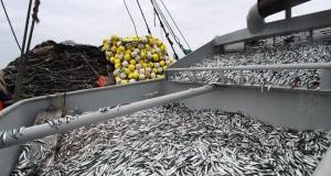 Pescadores respaldan suspensión temporal de pesca de Anchoveta