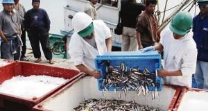 PIURA – Precio de Anchoveta debe ser equivalente al de Harina de pescado