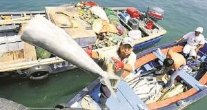 SNP afirma que pesca subirá 70% frente a 2014