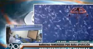 CALLAO – Bañistas temerosos por aparición de hidromedusas en el Mar