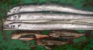 """El Niño, el """"imán"""" de nuevas especies marinas"""