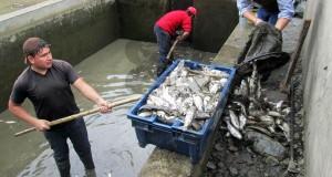 PALLASCA – Huaico destruye criadero de truchas y daña puente Llactabamba