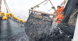 Pesca ilegal suma pérdidas por US$ 23,5 billones