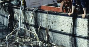 EE.UU – Enfoque basado en los derechos podría impulsar la Pesca mundial