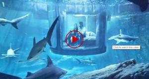 Paris ofrece concurso para dormir una noche con 35 tiburones