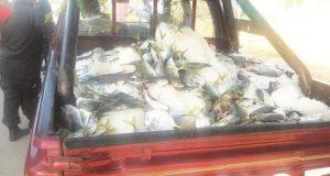 TUMBES – Policía decomisa S/ 10 mil en Pescado