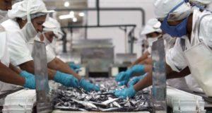 Producción de Harina de pescado crecerá alrededor de 7% este año