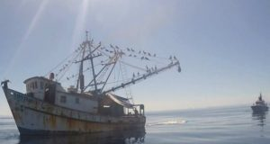 Aseguran embarcación por pesca ilegal en el Alto Golfo de California