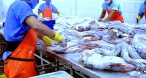 Gremios de pescadores representativos aislados de Grupo de Trabajo para formalizar artesanales de Pota