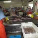 INVERSIONES PERÚ PACIFICO incumple pagos a trabajadores y abastecedores de Pota