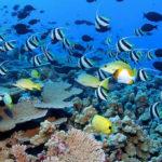 La acidez del Mar pone en riesgo a las especies marinas