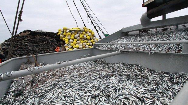 ¡Por fin se inicia la pesca!, 2 millones de toneladas de Anchoveta